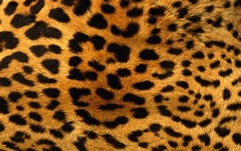 Jaguar Print The Leopard Print Wallpaper Leopard Print Iphone