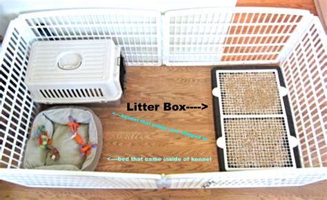how to litter a puppy how to house a puppy house plan 2017