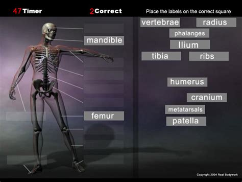 game of bones bone anatomy game skeleton real bodywork