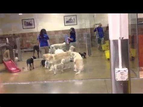 petco daycare petsmart doggie daycare