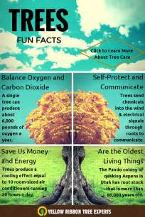 fun facts about trees visual ly