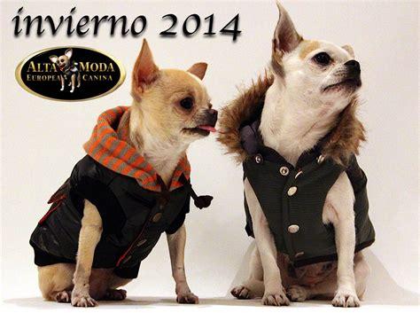 imagenes de invierno con animales ropa para perros abrigar perros invierno 2014 2015