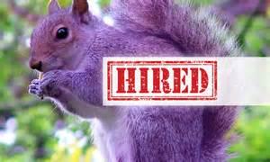 hunting the purple squirrels team resumepro