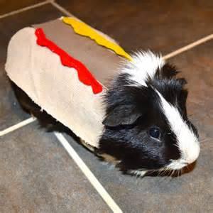 Guinea pig halloween costumes guinea pig costumes