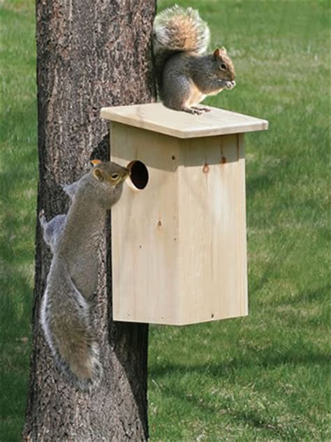 squirrel house duncraft com duncraft 3068 squirrel house