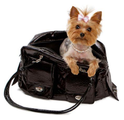 hazards  keeping  purse pet   purse  pet product guru