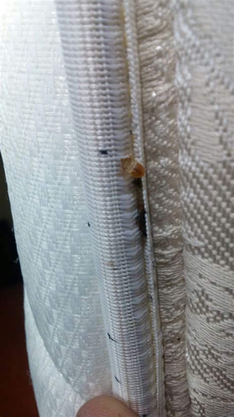 can bed bugs spread from room to room bed bugs lenegar s pest and moisture services 1385 laskin road b virginia va 23451