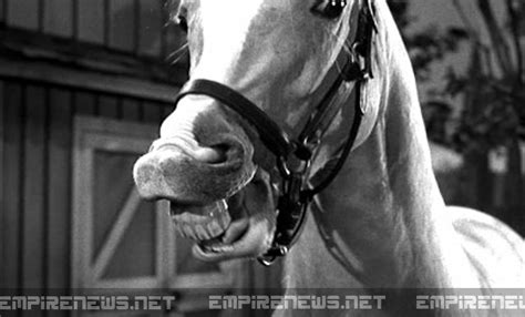 Mister Ed Het Sprekende Paard by Classic Sitcom Talking Mr Ed Disappears From