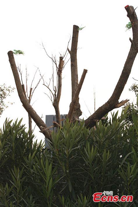 artificial bare trees artificial bare trees with branches 28 images bare tree branches with artificial leaves in