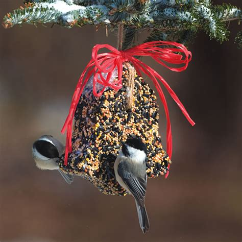 how to make seed bells for parrots duncraft bird seed bell