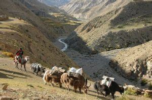 yak growing up in the remote dolpo region of nepal books de voyage en inde et en asie shanti travel