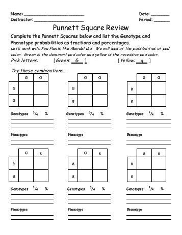 punnett square review worksheet ia2 punnett square worksheet human characteristics