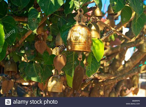 bells trees phuket bells hanging in the trees around the big buddha