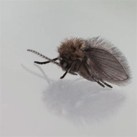 how to get rid of flies in the house how to get rid of bathroom flies my web value