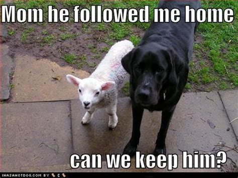 cats and dogs can we keep him can we keep him ha ha ha pinterest