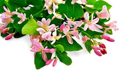 fiori di bach 7 fiori di bach per la mancanza di interesse nel presente