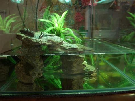vasca per tartarughe d acqua acquario per tartarughe d acqua accessori per acquario