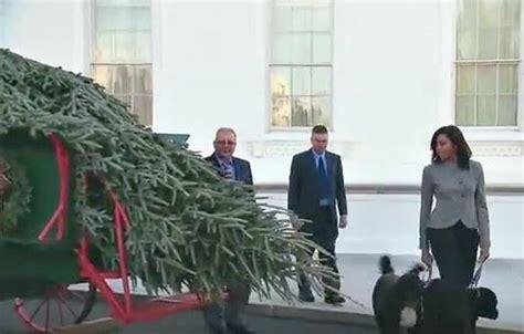 white house christmas tree arrives from pennsylvania gephardt daily