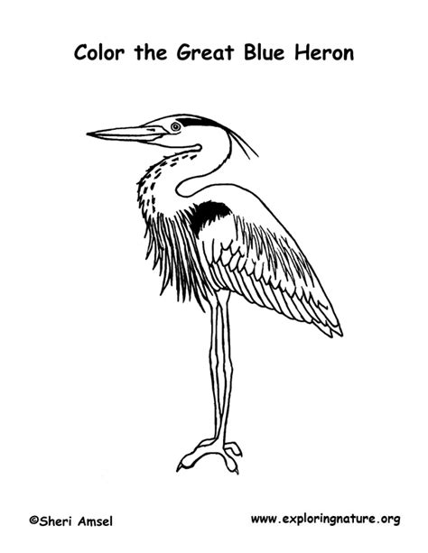 blue heron coloring page www imgkid com the image kid