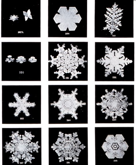 snowflake bentley the first snowflake photographs