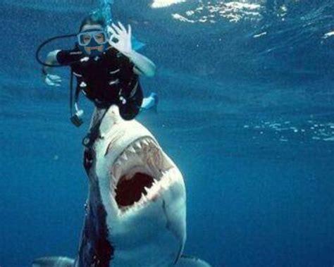 dive gratis fotomontaje de buceo peligroso con tiburones hombres y