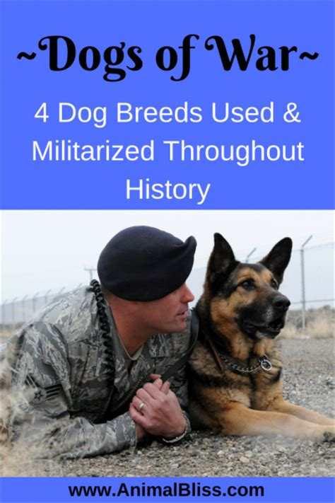 war breeds dogs of war 4 breeds used and militarized throughout history animal bliss