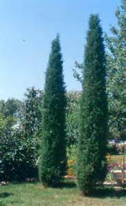 nebraska and iowa juniper trees arbor hills trees