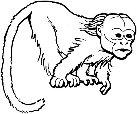 coloring page monkey hanging monkey coloring pages hanging monkey coloring pages monkey