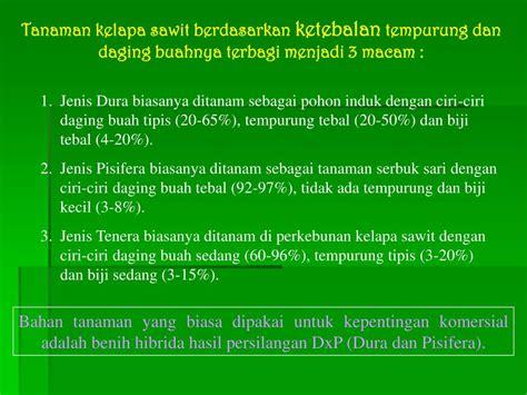 Benih Kelapa Sawit Hibrida ppt budidaya kelapa sawit powerpoint presentation id