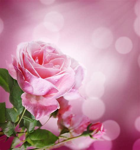 feliz jueves con rosas jpg feliz jueves con rosas jpg newhairstylesformen2014 com