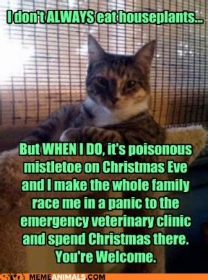 veterinary signs quotes  christmas quotesgram