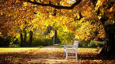 autumn park bench park autumn bench mystery wallpaper