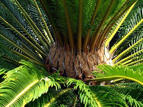 asiatische zimmerpflanzen asian indoor plants newpro