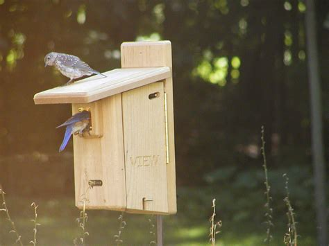bird houses with viewing window birds choice ultimate bluebird house with viewing window and 2 engraved doors