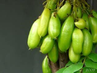 bukit anti buah belimbing besi wulu