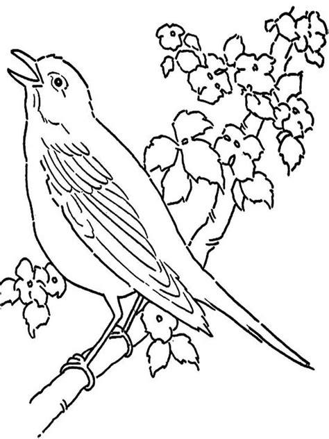 roadrunner bird coloring page 92 roadrunner bird coloring page free roadrunner