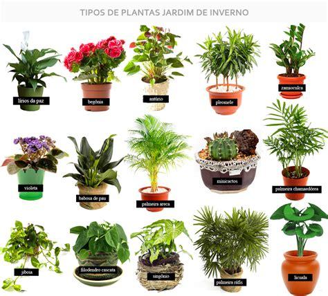 fazer plantas jardim de inverno na sala como fazer passo a passo simples