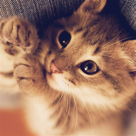 wallpaper cute kitty wallpapers