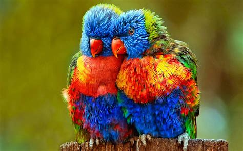 wallpapers of colorful animals small colorful parrots wallpapers hd wallpapers13 com