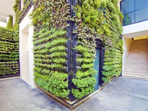 living walls vertical gardens dr weil s garden