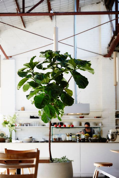 the plant society a new permanent location in collingwood