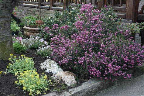 immagini di giardini rocciosi affordable aiuole giardini rocciosi with giardini
