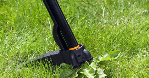 Unkraut Aus Rasen Entfernen 407 by Unkraut Im Rasen Bek 228 Mpfen Mein Sch 246 Ner Garten
