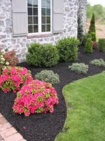 low maintenance landscaping plants best 25 low maintenance shrubs ideas on low