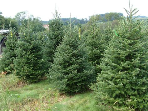 opinion real christmas trees vs fake christmas trees