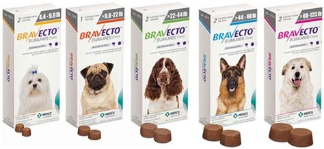 bravecto side effects in dogs veterinary highlights fda approves new chewable flea tick preventive dawg business