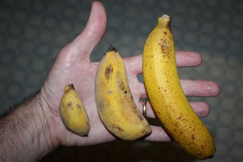 Big Size Banana by Why Does Reddit Use Bananas A Non Standard Sized Item