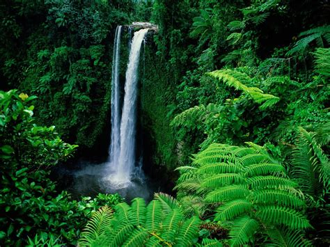 all tropical rainforests animals search results insectanatomy pictures of a rainforest search results insectanatomy
