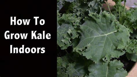 grow kale indoors   favorite led grow light