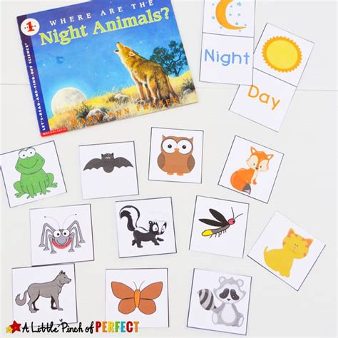 printable animal sorting cards 25 best ideas about nocturnal animals on pinterest owls
